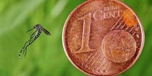 moustique tigre taille